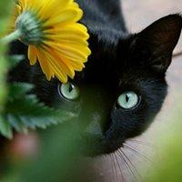 Цікаві факти про котів розповість бібліотека для дорослого населення №13